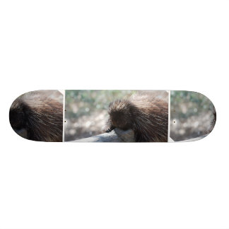 Relaxing Porcupine Skateboard Decks