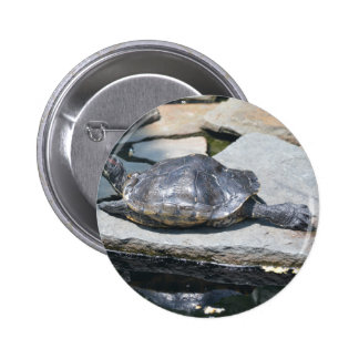 relaxing turtle pinback buttons