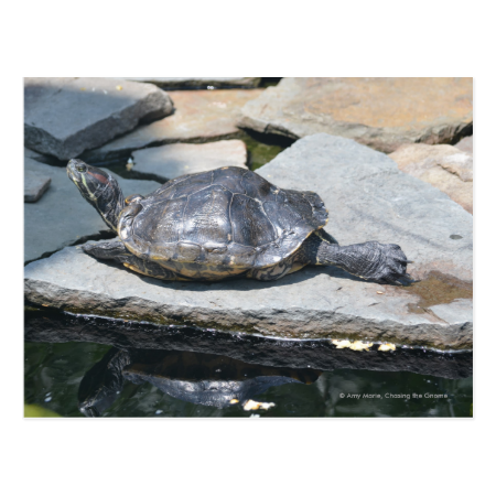 relaxing turtle post card