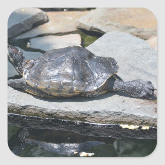 relaxing turtle square sticker
