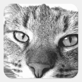 Relaxt horneas gato gato laid - Cat resting -
