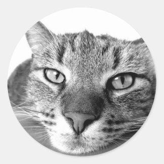 Relaxt laid horneas gato gato - Cat resting -