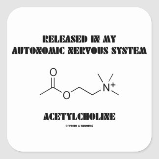 Released In Autonomic Nervous System Acetylcholine Square Sticker