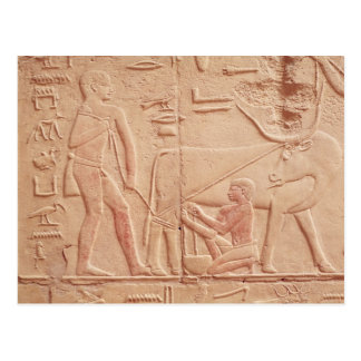 Relief depicting a man milking a cow postcard