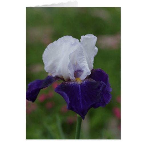 Religious Birthday Cards -- Purple Iris