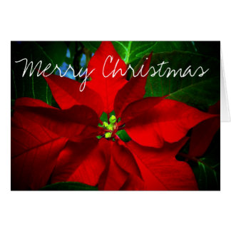 Religious Christmas Cards - Invitations, Greeting & Photo Cards ...