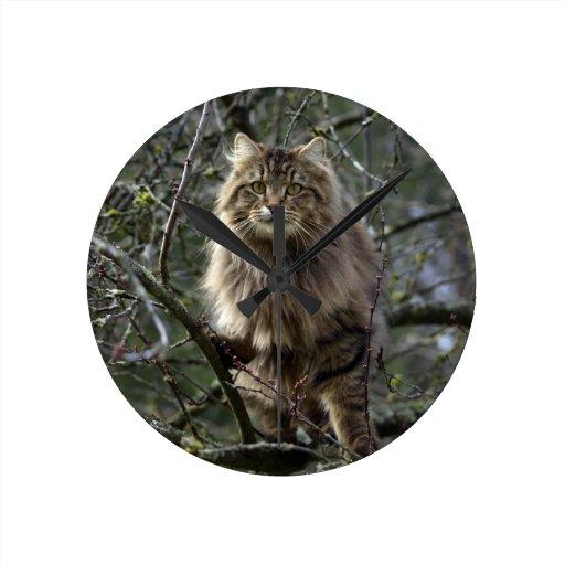 Reloj animal de pelo largo del mascota del gato de