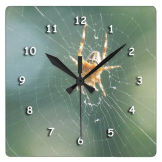 Reloj - araña en el Web