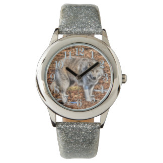 Reloj ártico blanco de la fauna del lobo y de la