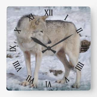 Reloj ártico blanco de la foto del lobo y de la