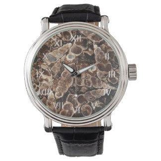 Reloj de la ágata de Turritella