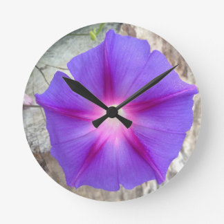 Reloj de la floración de la correhuela