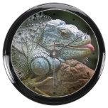 Reloj de la iguana relojes aqua clock