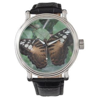 Reloj de la mariposa de las podadoras de Brown