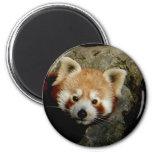 Reloj de la panda imán para frigorifico