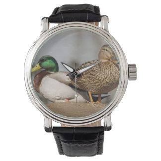 Reloj de los patos del pato silvestre