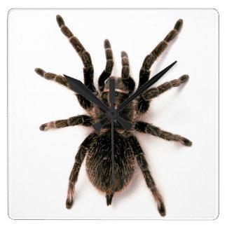 Reloj de pared de la araña del Tarantula