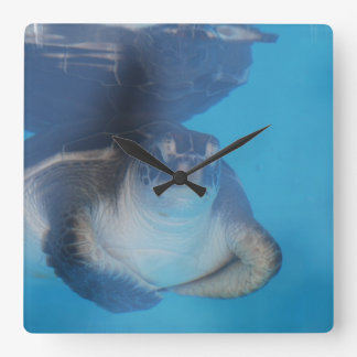 Reloj de pared de la tortuga de mar del bebé