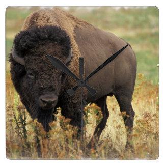 Reloj de pared de madera del bisonte