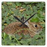 Reloj de pared del conejo