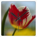 Reloj de pared rojo del tulipán