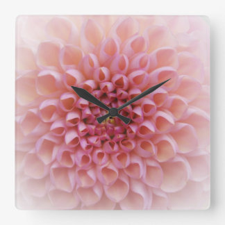 Reloj de pared rosado de Chrystanthemum