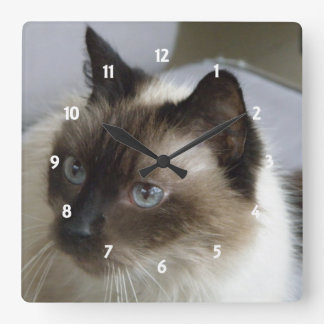 Reloj de pared siamés del gatito