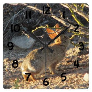 Reloj del conejo de conejo de rabo blanco del desi