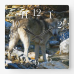 Reloj del lobo gris y de la foto de Stony Creek