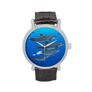 Reloj del mamífero marino