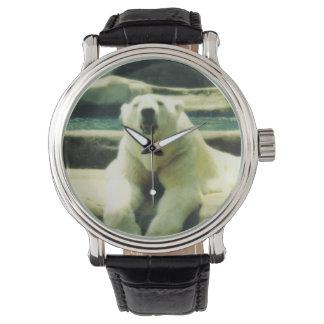 Reloj del oso polar