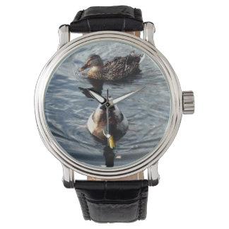 Reloj del pato silvestre
