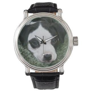 Reloj del perrito del pitbull (Angie)