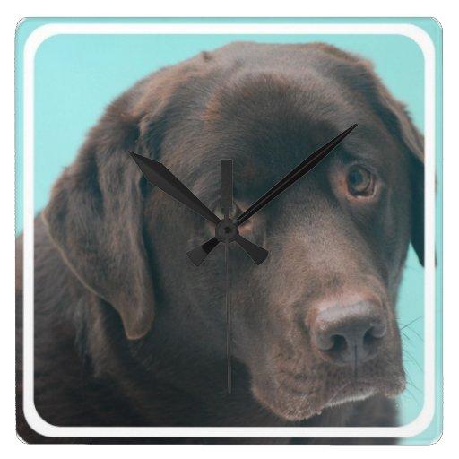 Reloj del perro del laboratorio del chocolate