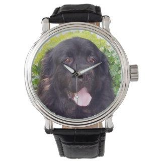 Reloj deportivo del perro de Terranova