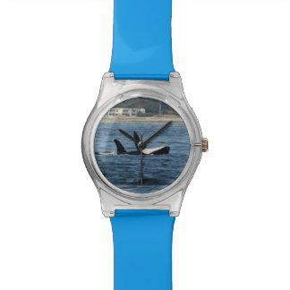 reloj elegante del fracaso de vientre de la orca