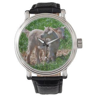 Reloj enano de los niños de la cabra