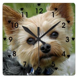 Reloj lindo de Yorkie