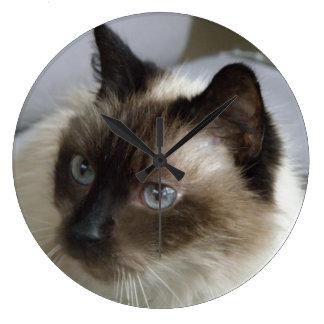 Reloj siamés del gatito