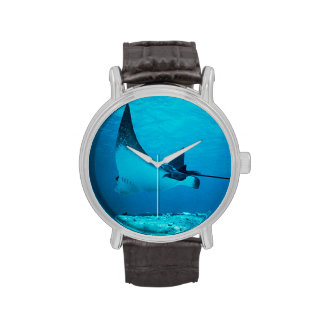 Reloj subacuático de la pastinaca