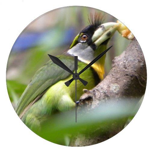 Reloj tropical del pájaro