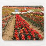 Reme sobre la fila de tulipanes en el jardín del t