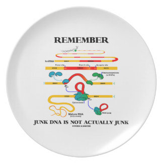 Remember Junk DNA Is Not Actually Junk Dinner Plate