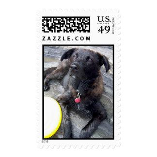 Remember Me Stamp