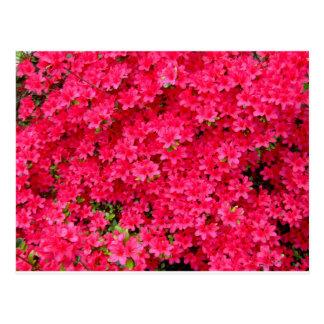 Remiendo rojo de la flor de la azalea tarjeta postal
