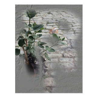 Reminiscent Rose Postcard