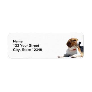 Remite de Brown negro y del perro blanco del beagl Etiqueta De Remitente