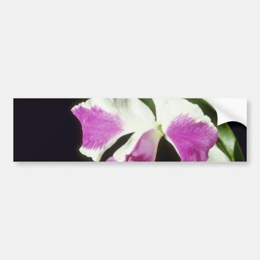 """Remo rosado Prada """"corona"""" las flores (de Laelioca Pegatina De Parachoque"""