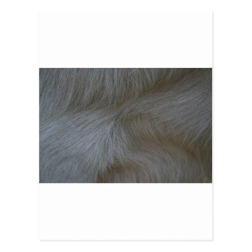 Remolinos del modelo blanco del pelo de la cabra tarjeta postal