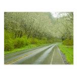 Remote highway through forest postcard